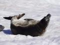Jan2020_PortalPoint_Antarctic-107