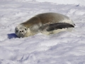 Jan2020_PortalPoint_Antarctic-109