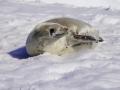 Jan2020_PortalPoint_Antarctic-110