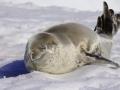 Jan2020_PortalPoint_Antarctic-114