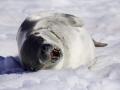 Jan2020_PortalPoint_Antarctic-127