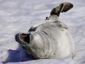 Jan2020_PortalPoint_Antarctic-130