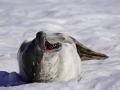 Jan2020_PortalPoint_Antarctic-132
