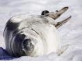 Jan2020_PortalPoint_Antarctic-135