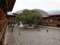 PunakhaDzong-2019-098