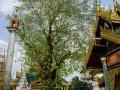 Yangon Shwedagon Pagoda Oct2017 -088