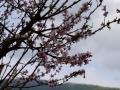 Punakha-Thimphu-111